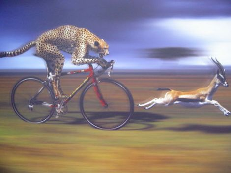 cheetah-animal-bike--large-msg-11475928405-2